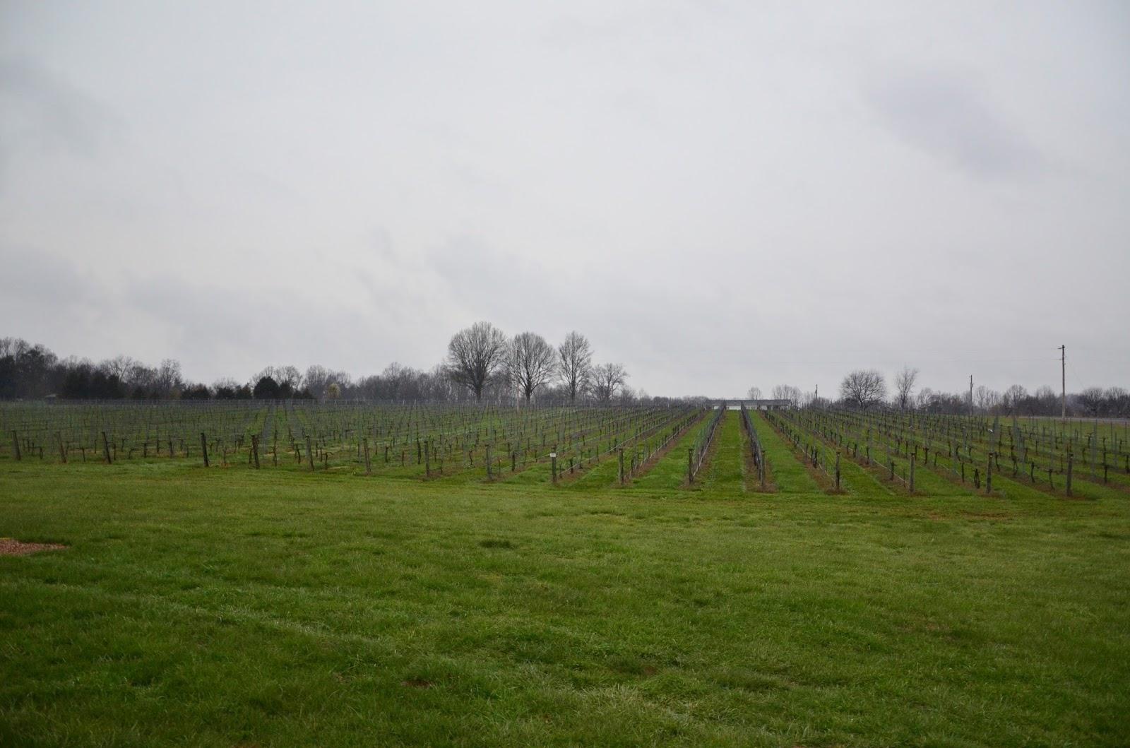 Lazy Elm Vineyards-2.jpg