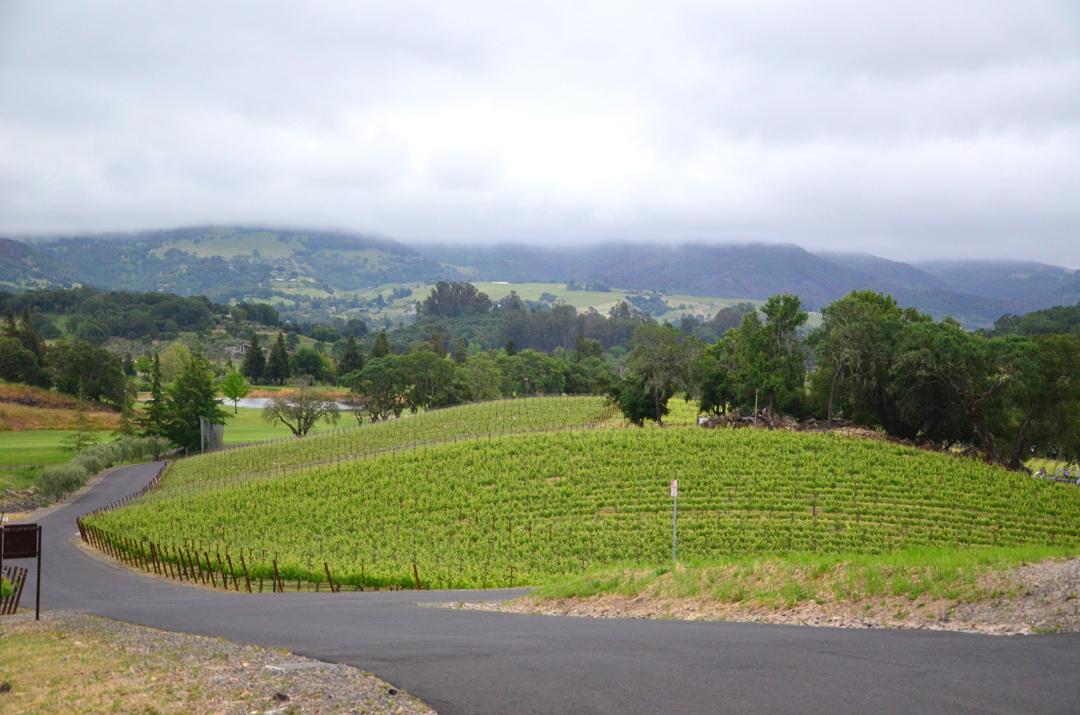 Italics Winegrowers Napa-1.jpg