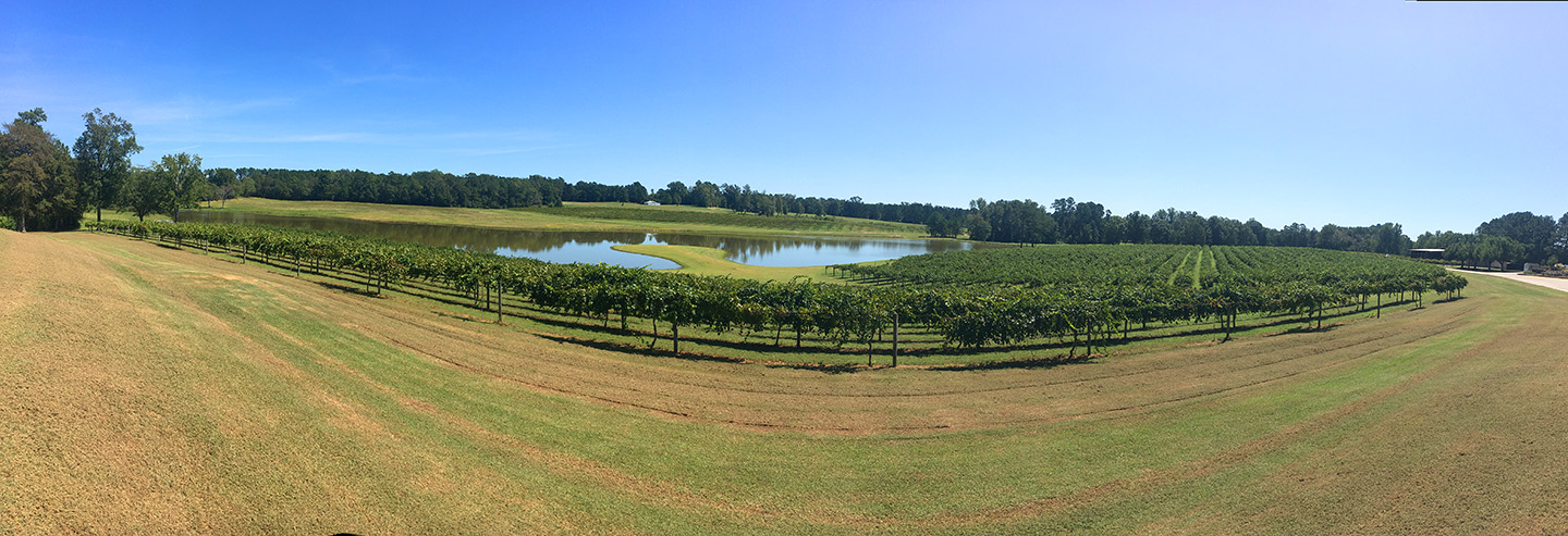 A view of the vines and lake outside of Gregory Winery located in Angier, N.C.