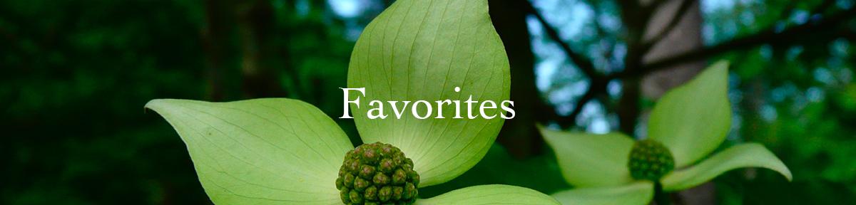 PageHeaders-Favorites.jpg