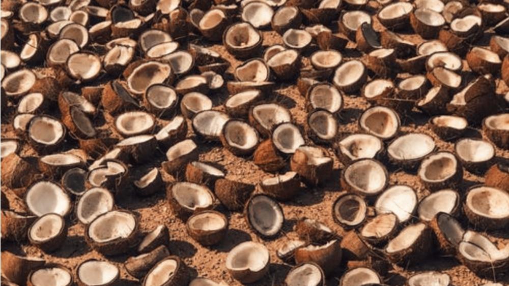 heel veel kokosnoten liggend op de grond