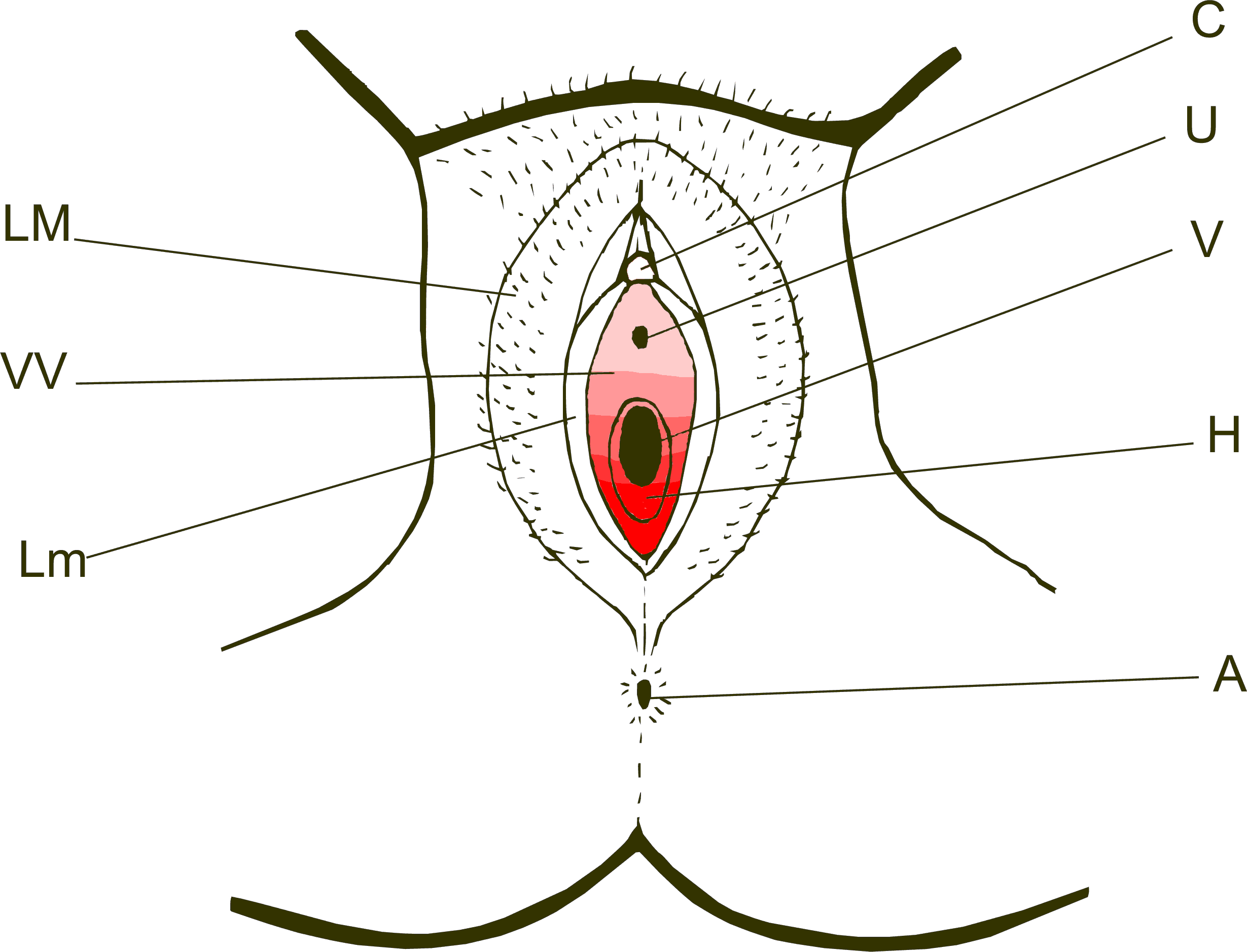 Vestibulodynia The Sexmed Advocate