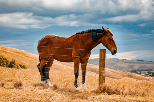 1 horse.jpg