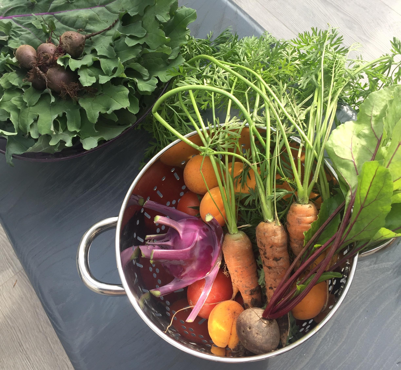 SS carrots resize.jpg