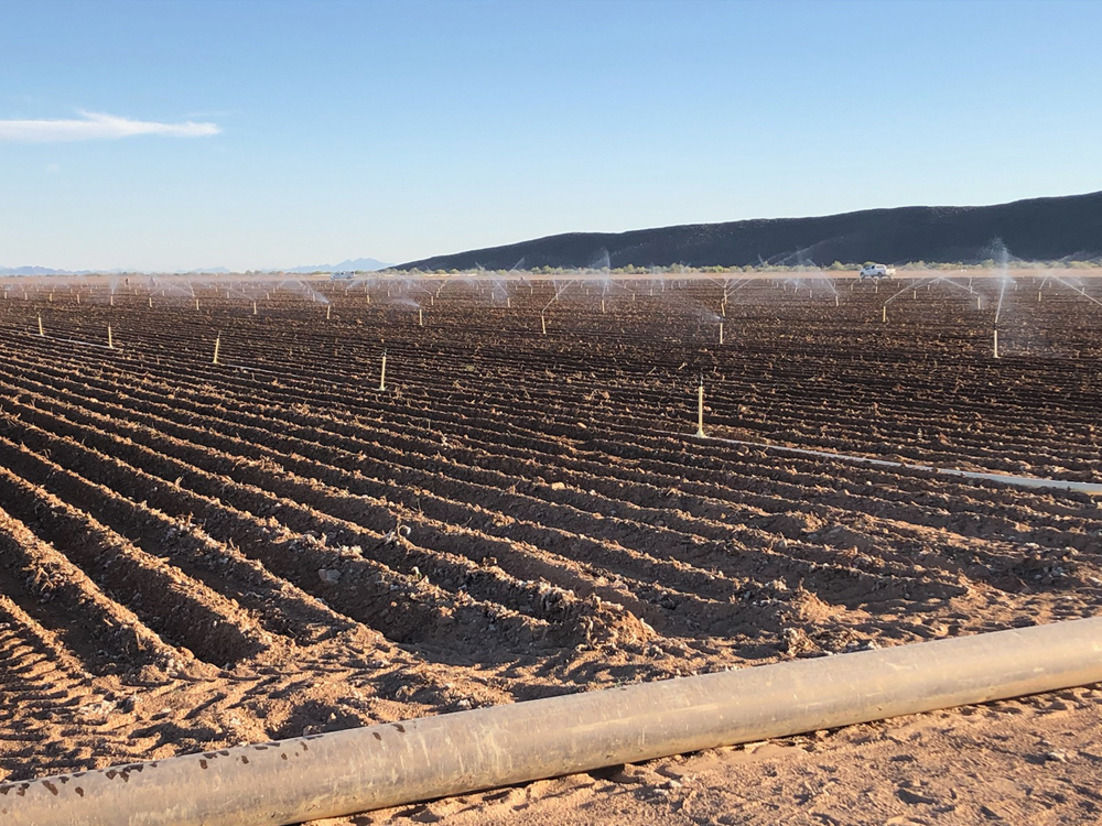 Hemp seeds were planted last week on this 10,000-acre farm near Yuma that will be used to create hemp-derived CBD products.