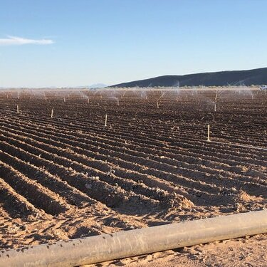 Proposed $65M Hemp Extract Facility to Employ up to 175 in Phoenix. - Hemp-derived CBD industry is expected to reach $16 billion nationwide by 2025