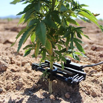 Integrated CBD Sets Sustainable Hemp Farming Standards with Completion of Precision Irrigation Technology Installation - Integrated CBD announced the installation completion of plant-based sensor technology on their approximately 10,000 acre industrial hemp farm in Yuma County, Arizona.