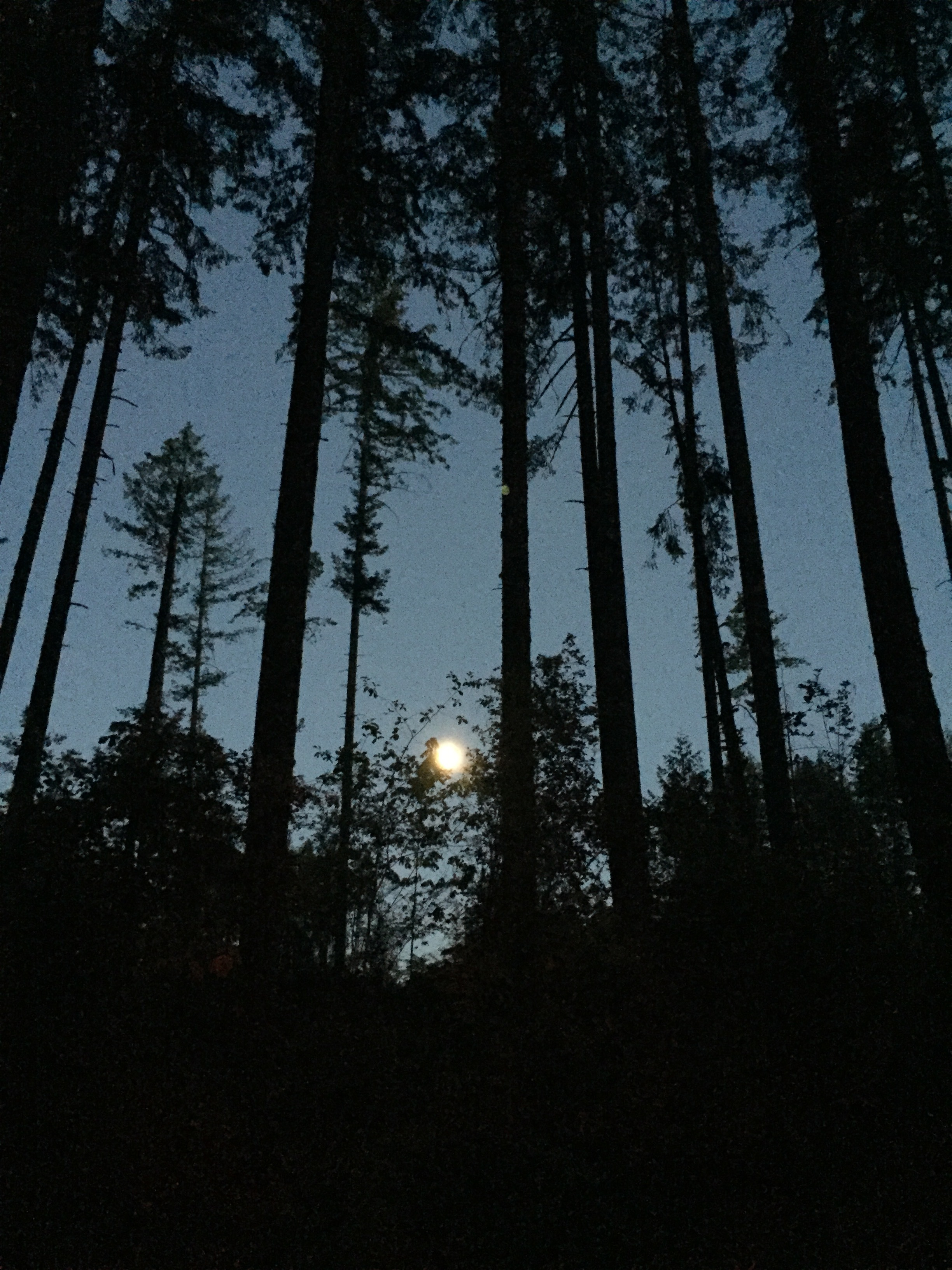 Full Moon, Olympia National Park, WA