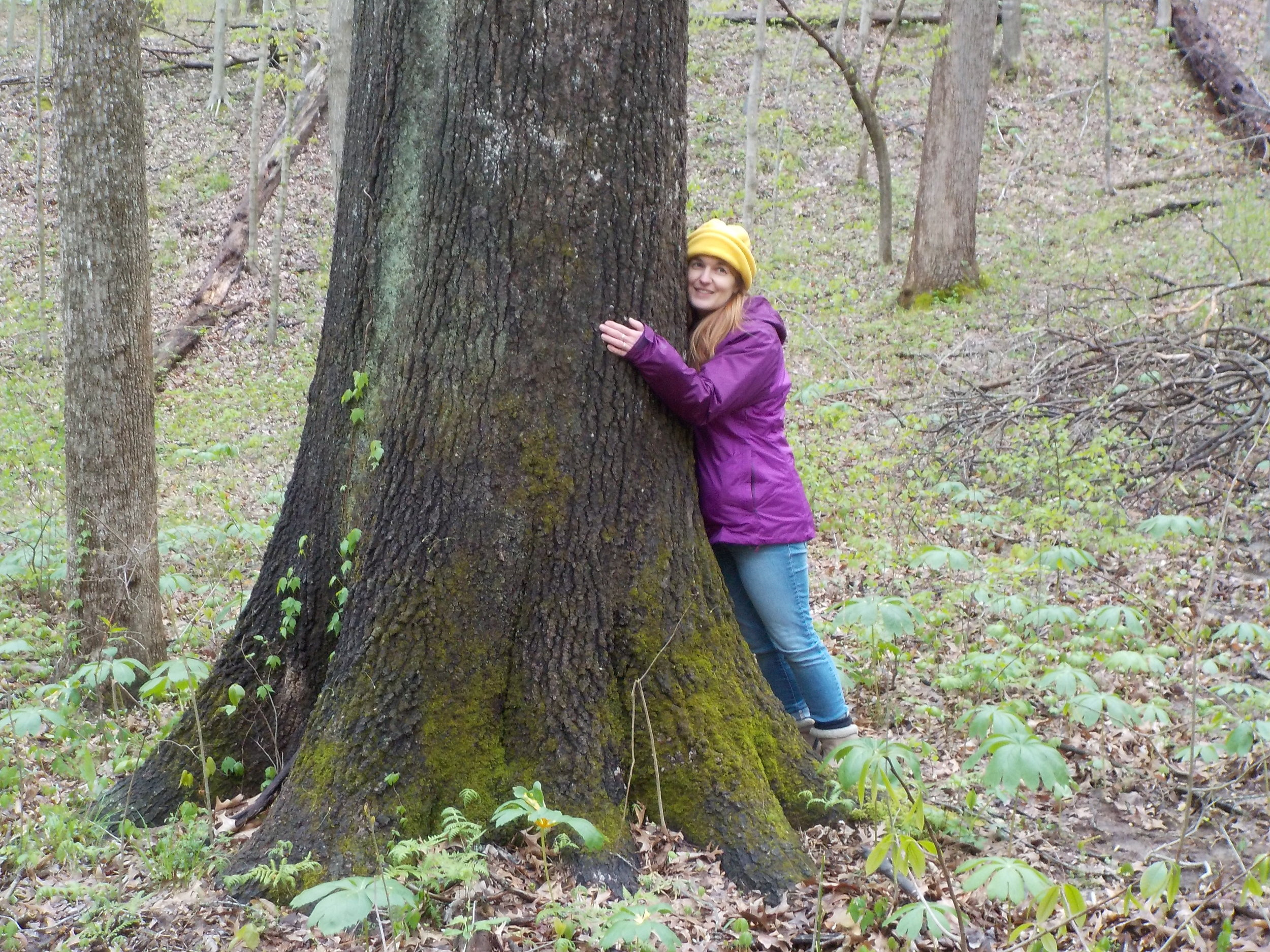 Activists oppose Shawnee National Forest plan that calls for commercial timber sales of oaks, hickories - September 29th 2019- Molly Parker of the Southern reviews the historical and present day fight to save the Shawnee Forest.