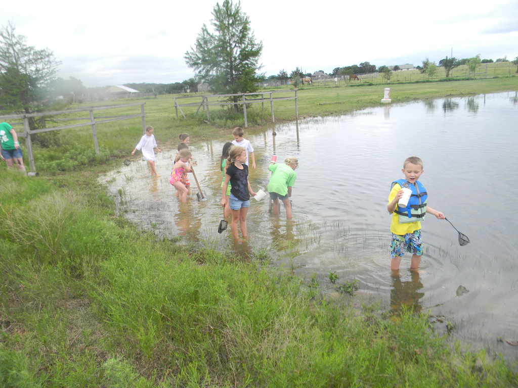 Exploring around the pond with nets and dippers.