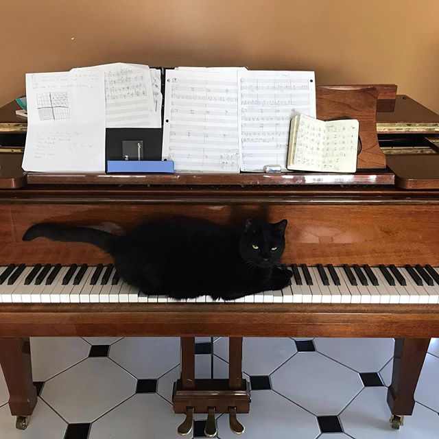 I can't tell who's writing the music anymore... me or the cat?...