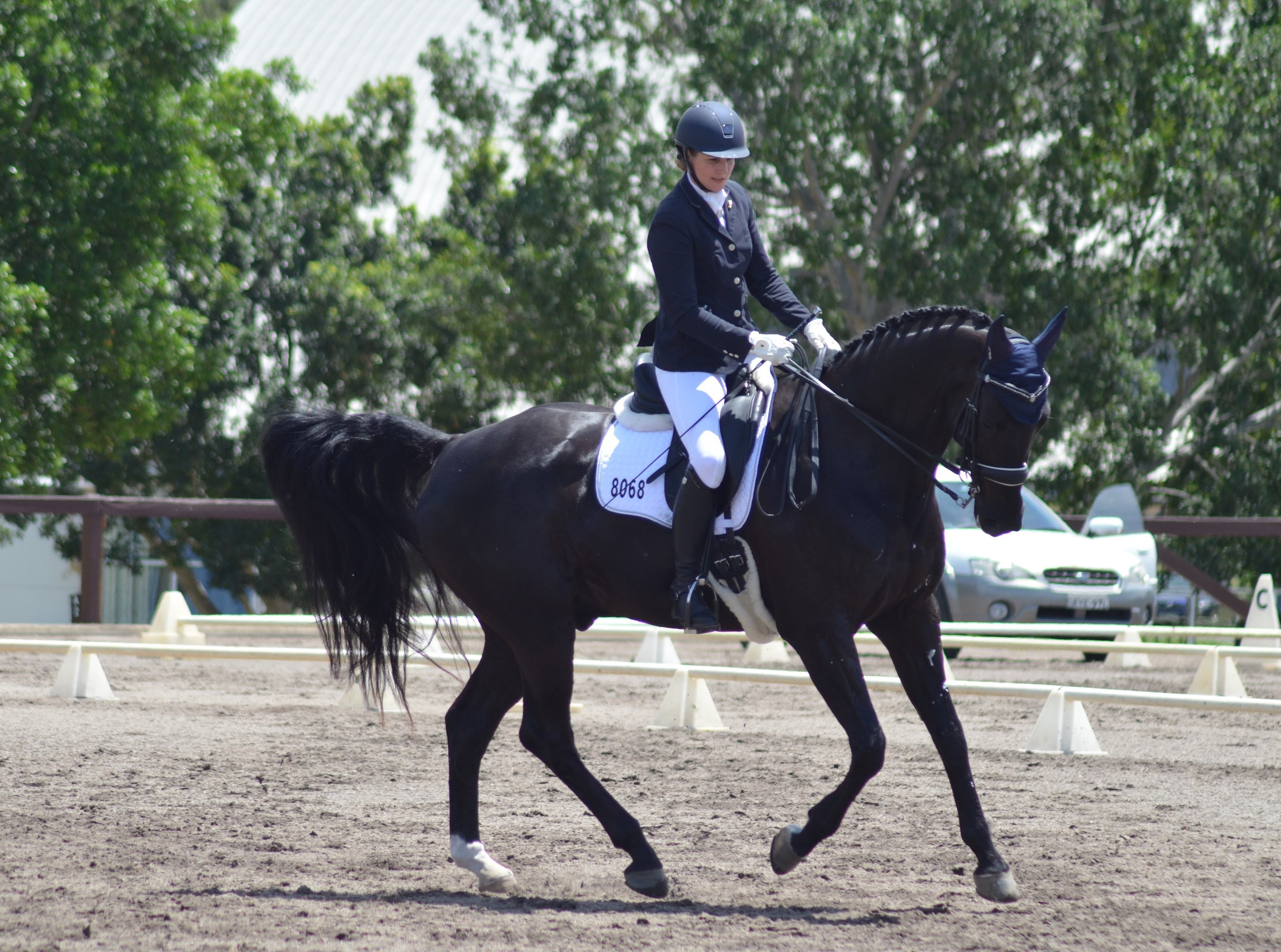 Debra Mills and Favoloso - AOR Medium Horse of the Year.jpg