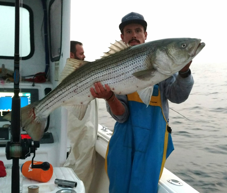 Bear Stripers night striped bass (local/ block island) — bloodline