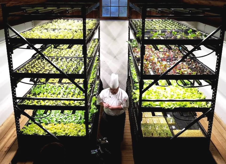 Join The Indoor Farming Revolution - We provide an on-demand Indoor farming service to make sustainable indoor farming more accessible Than Ever Before
