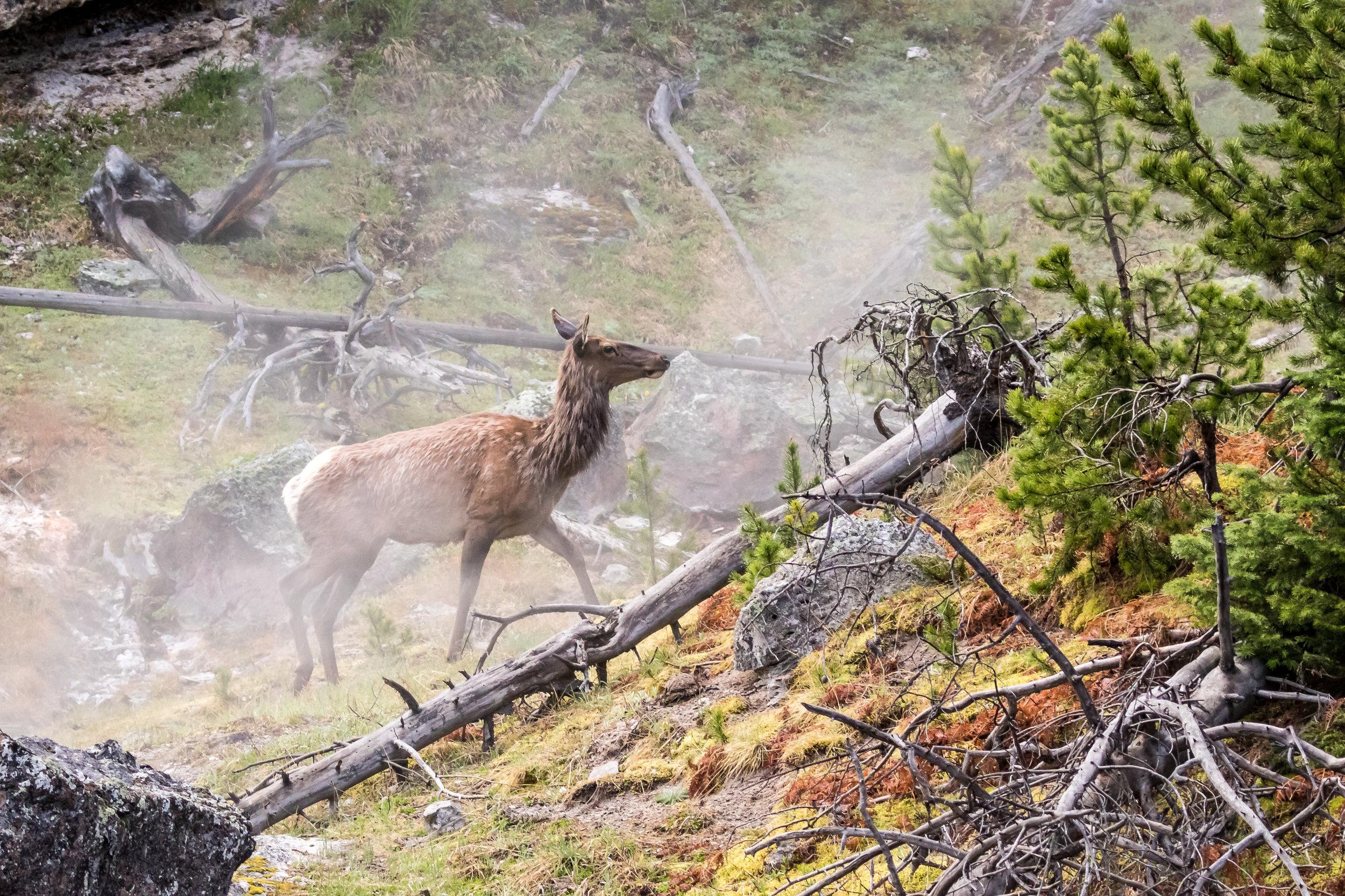 Elk-3447.jpg