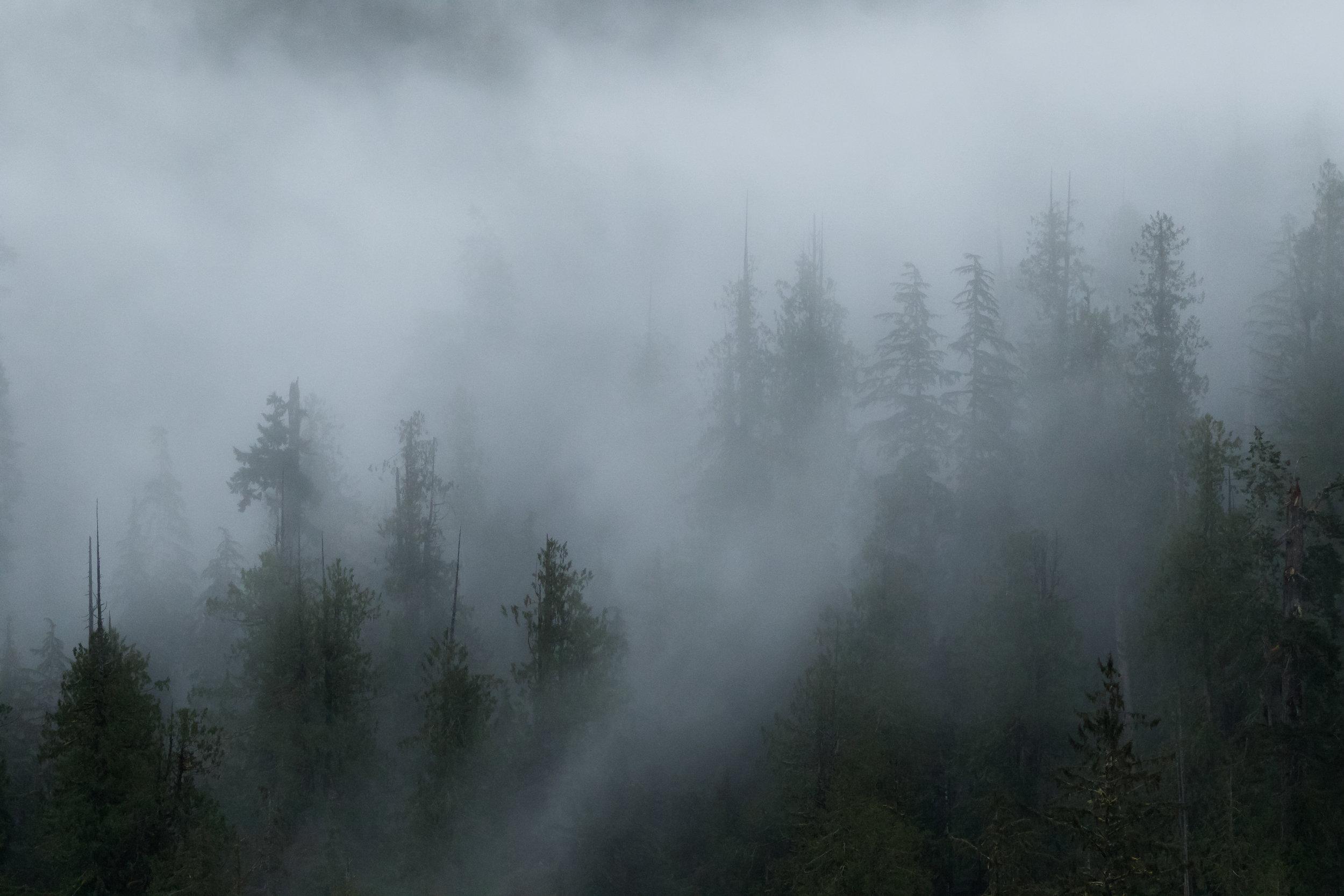 Misty Mountain Forest-6391.jpg
