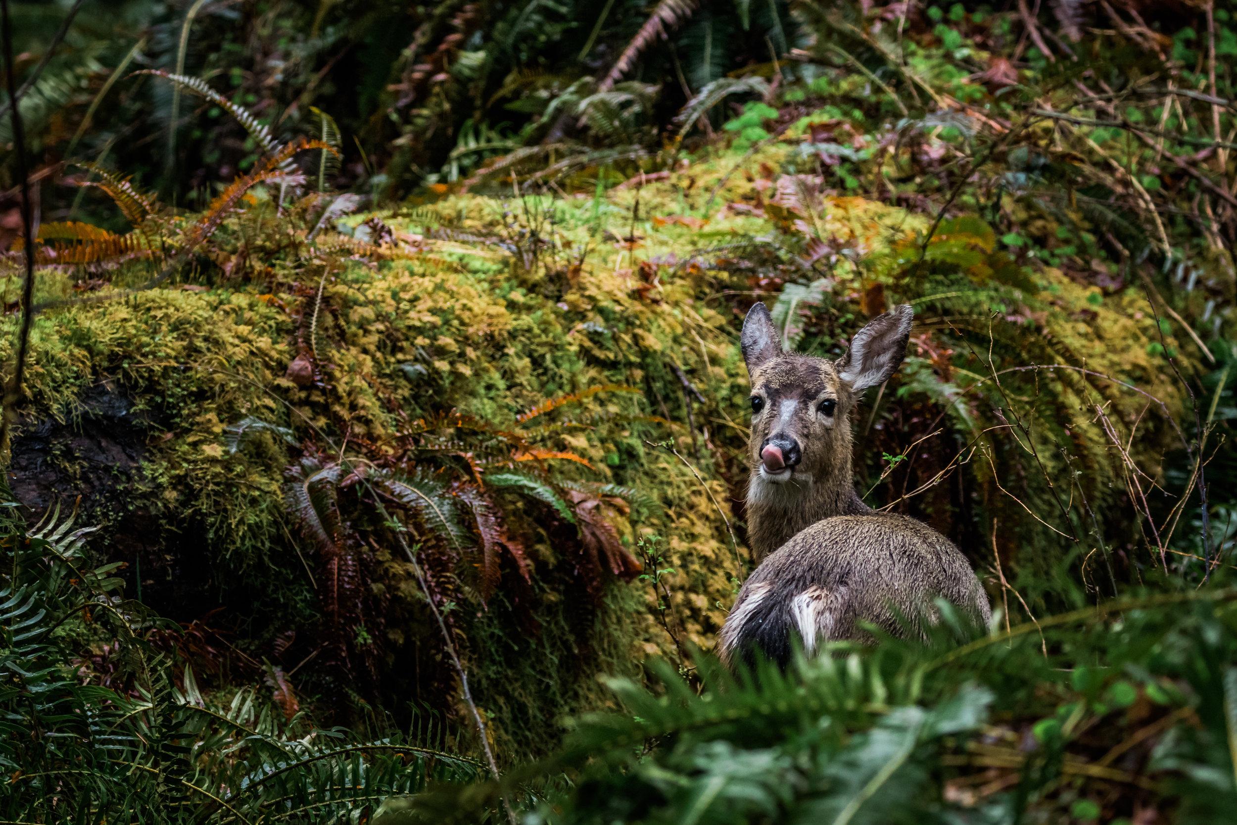 Mule Deer Tease-6433.jpg