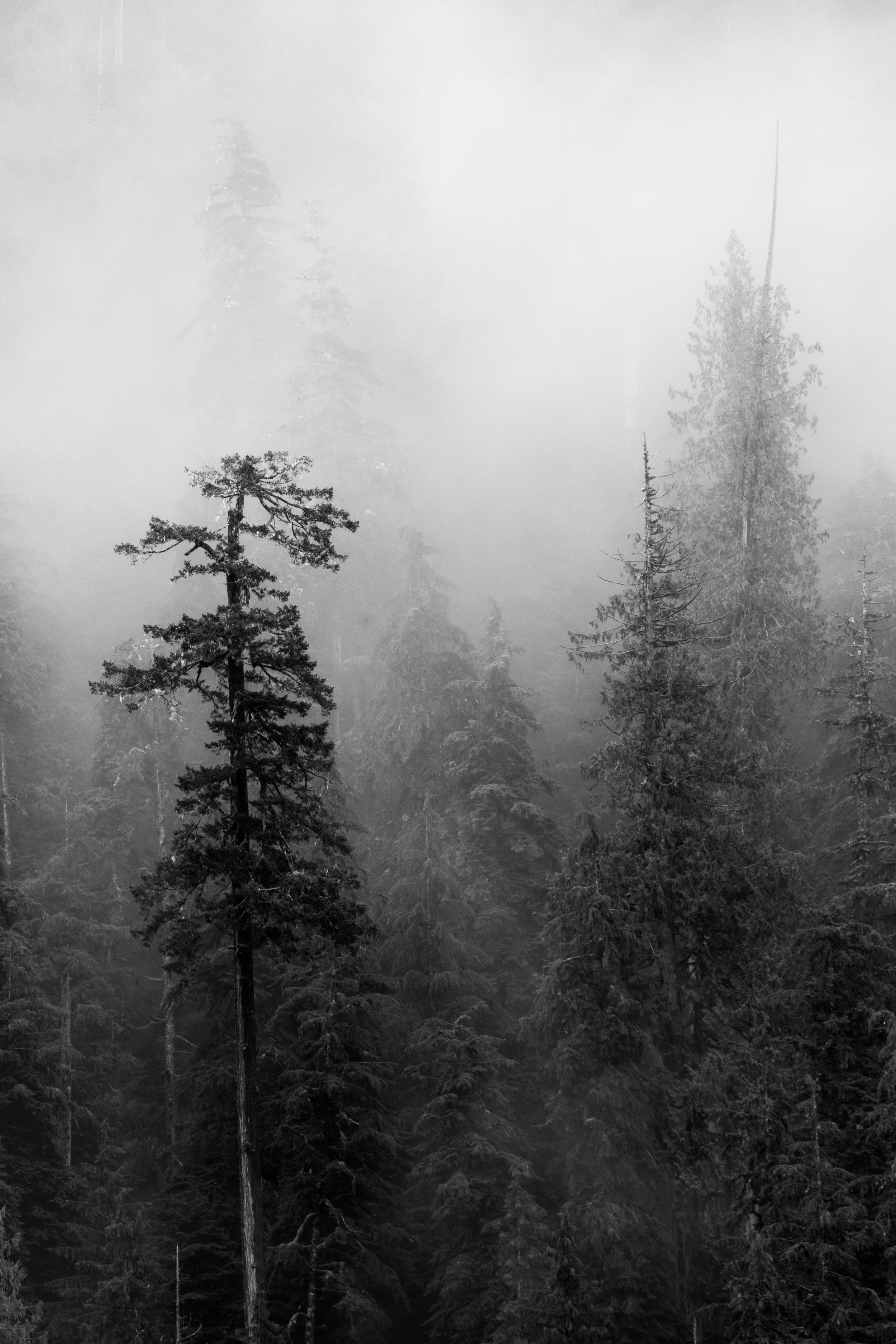Rainforest Fog-6418.jpg