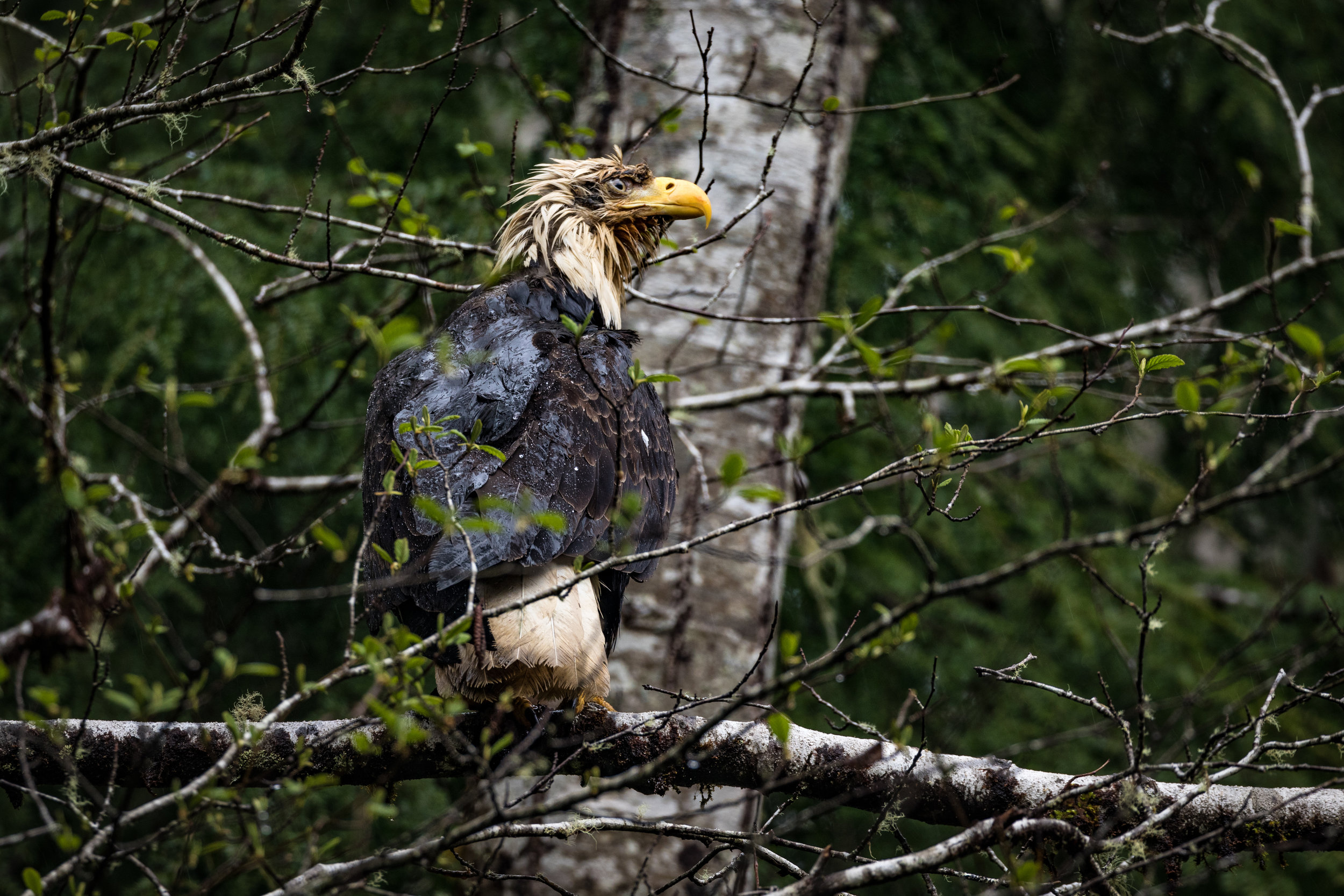 Wet Eagle-6615.jpg
