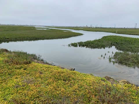 A photo I took at Seal Beach National Wildlife Refuge in California during my visit. — Courtney Lewis / Refuge Association