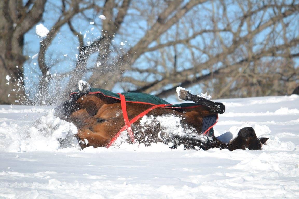 Manny enjoying the snowstorm