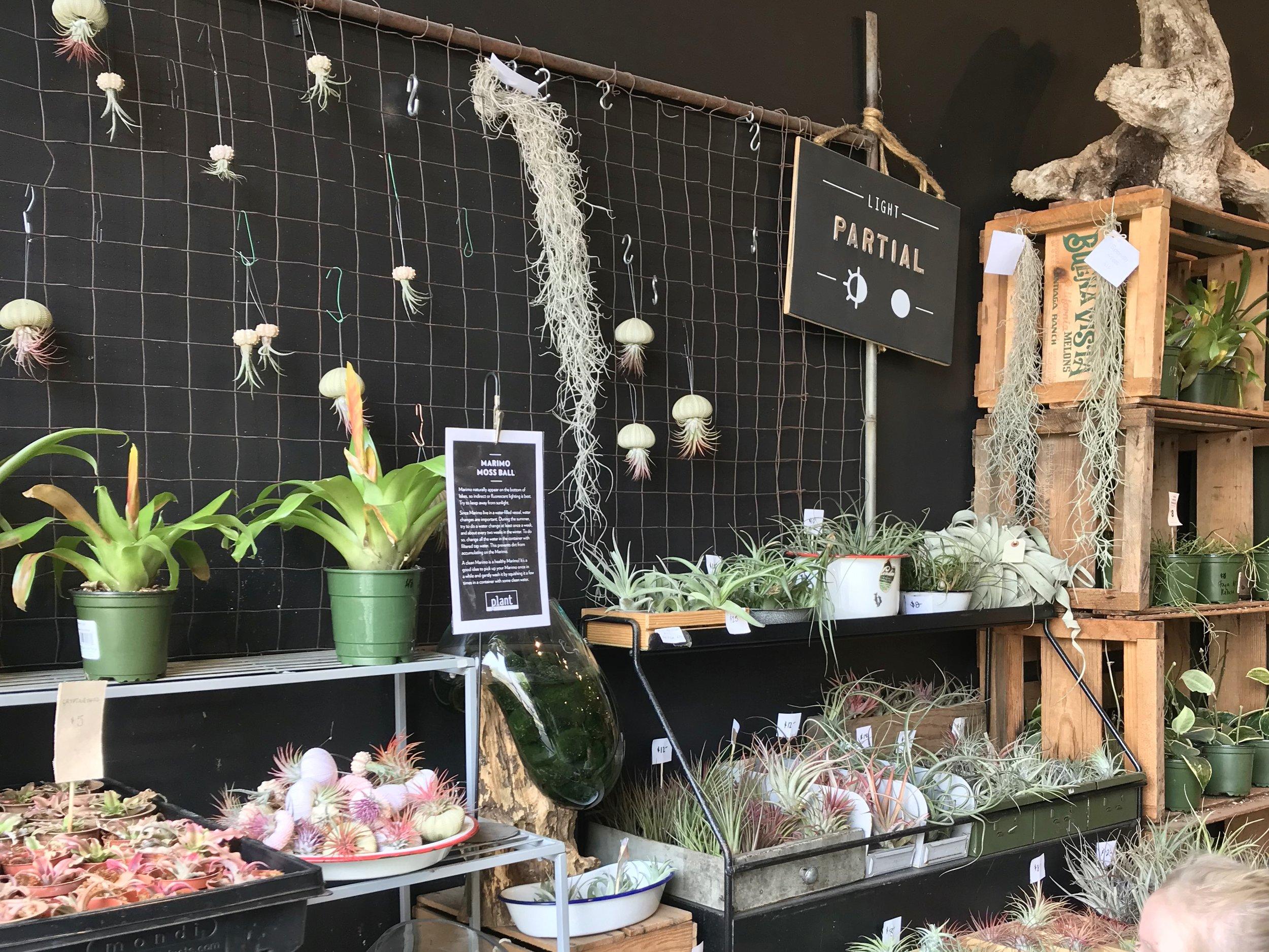 visit-plant-shop-calgary-display