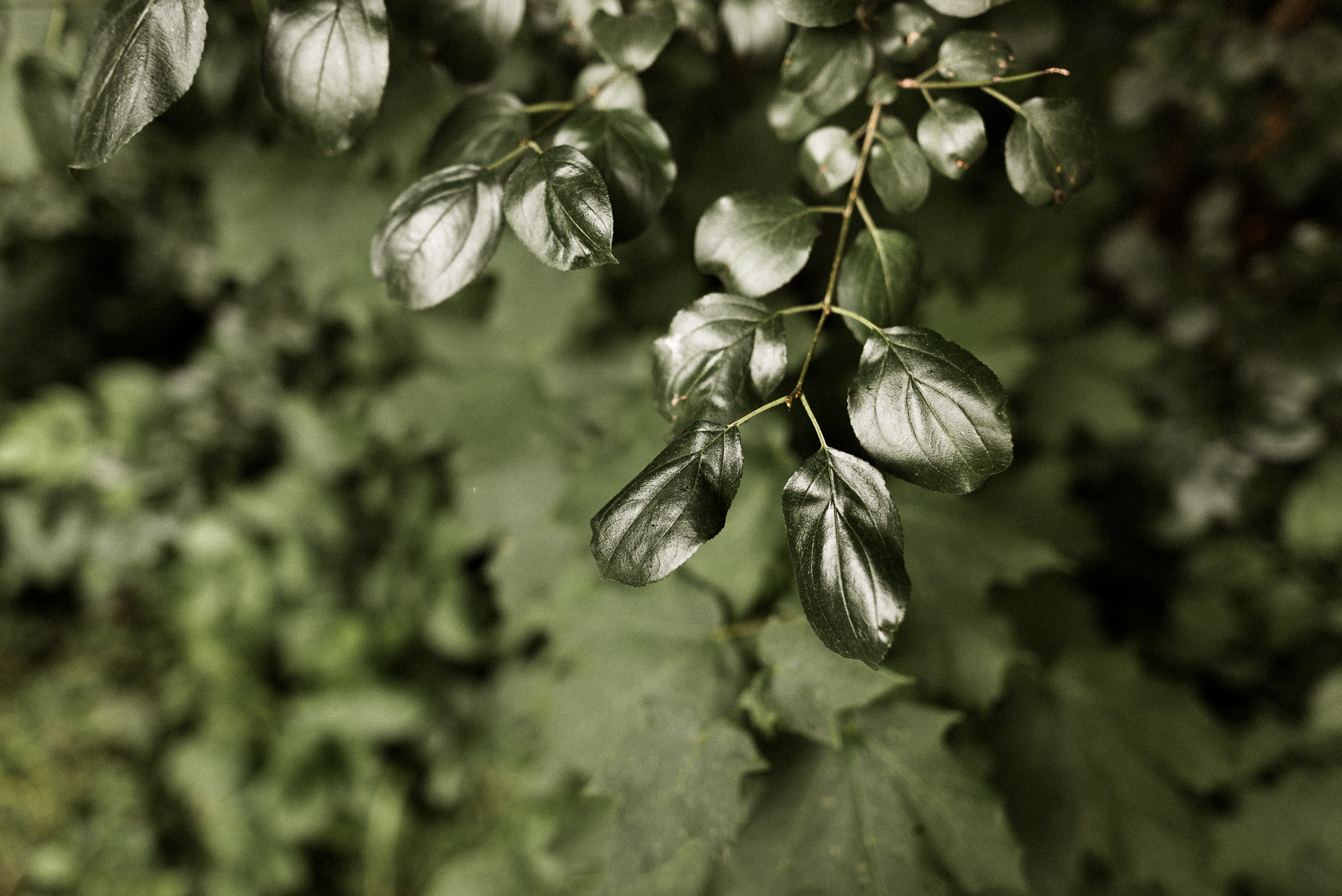 invASIVE PLANT REMOVAL - Do you have a Buckthorn infestation? Or other noxious weeds? Invasive plant species not only threatening our parks and natural areas, they may also be invading your yard!