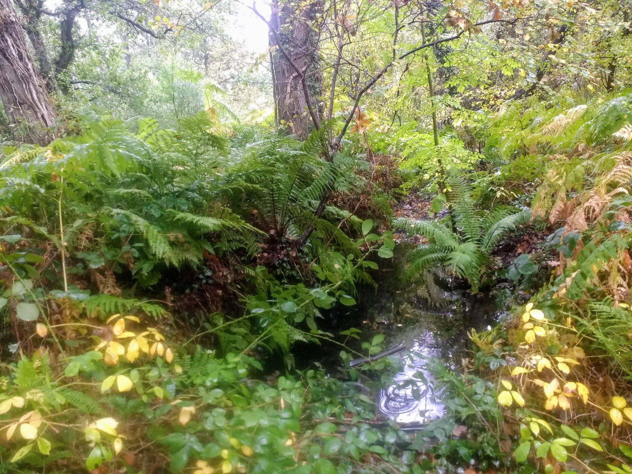 Somerset swamp