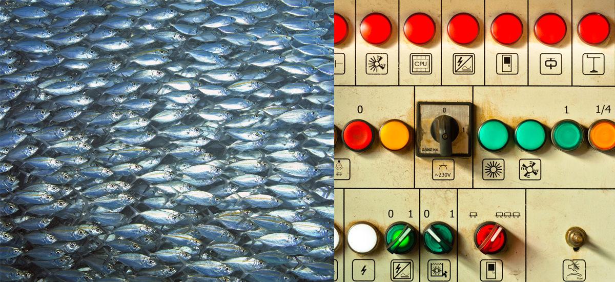 ButtonFish.jpg