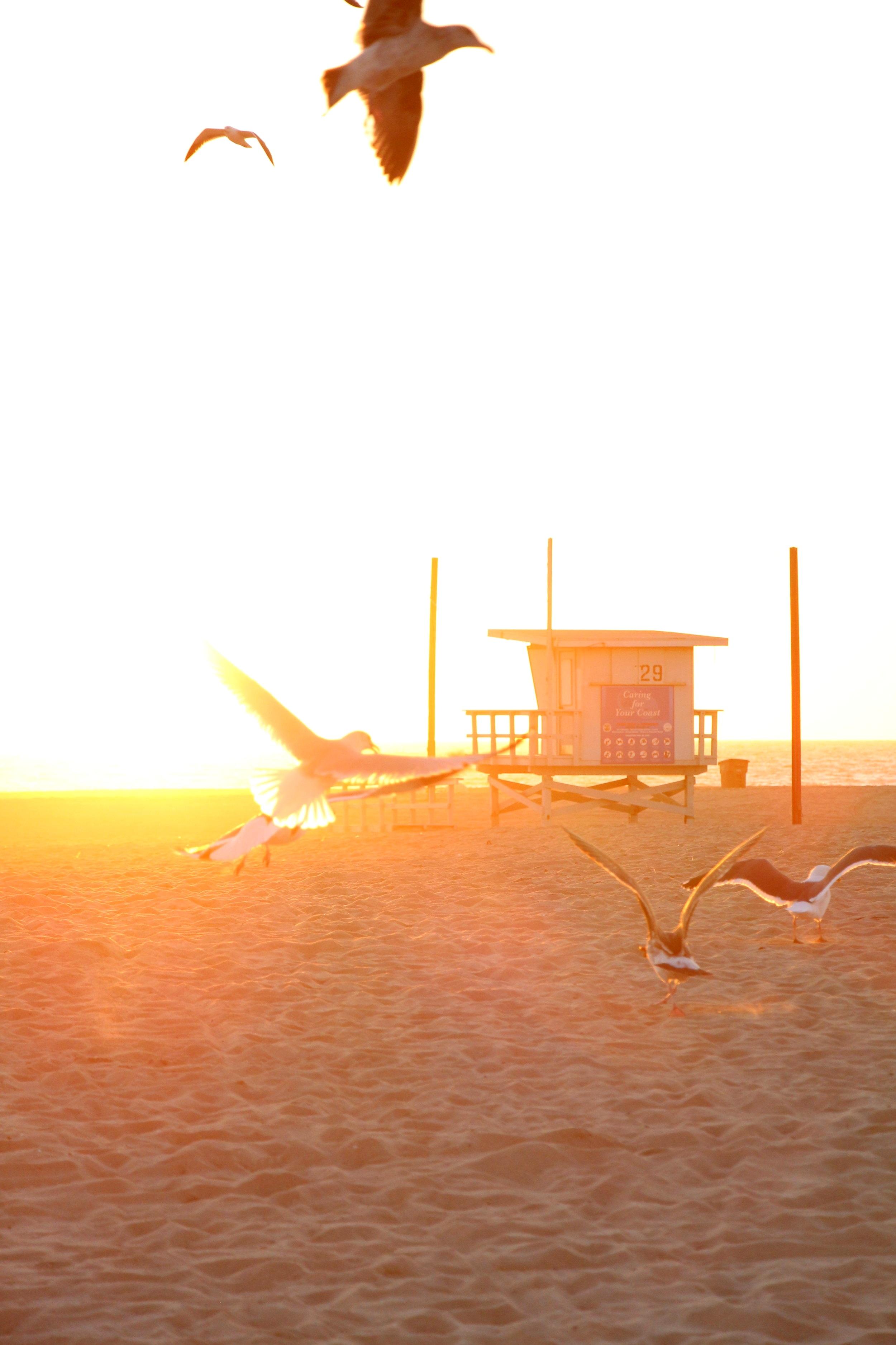 CONTACT - 94 Highland AvenueManhattan BeachCalifornia 90266 USAMarie-Agnèsfr + 33 6 99 20 08 46us + 1 310 974 2443marie@bungalowproduction.comGaryfr + 33 7 82 78 16 02us + 1 310 469 4888gary@bungalowproduction.com