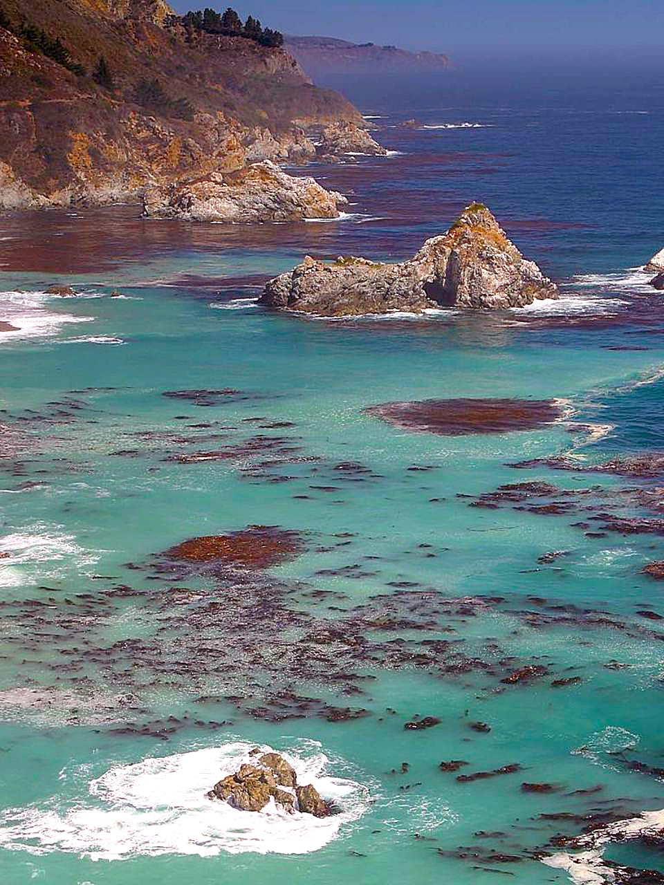 big-sur-rocky-coast-fog-and-giant-kelp-california-alliance-fisheries.jpg
