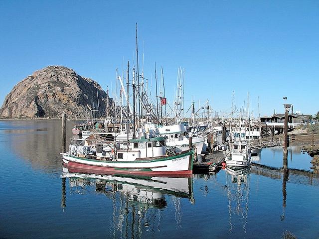 morrobay-alliance-fisheries.jpg