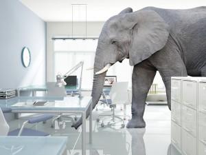 elephant-inthe-workplace.jpg