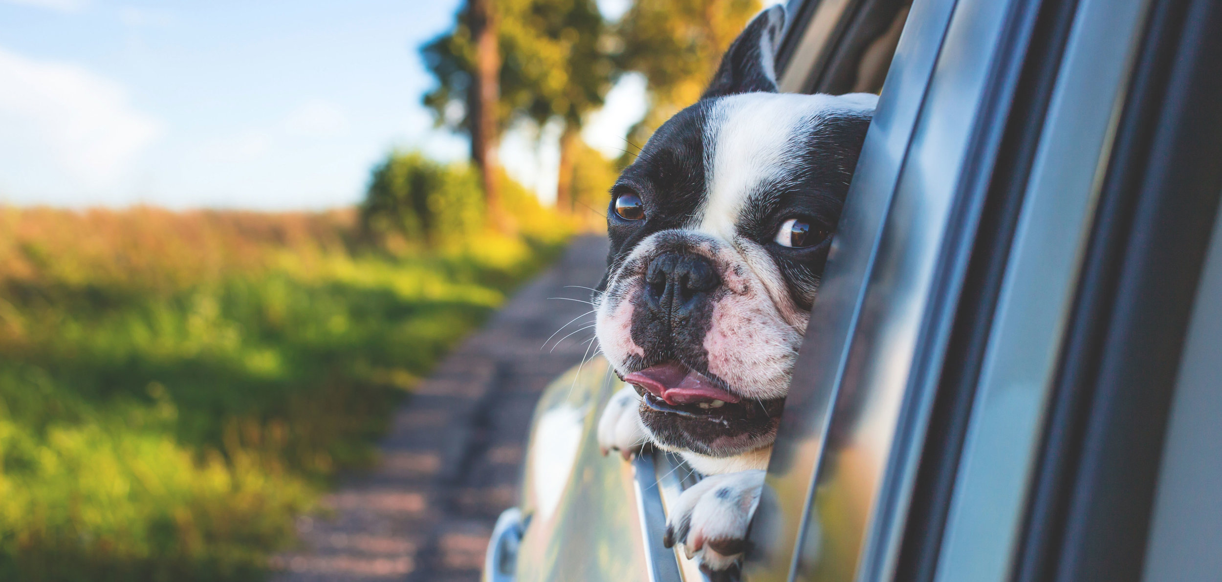 Pet Taxi - Need Help Getting Your Pet Around? Our Pet Taxi Service is Here to Help!