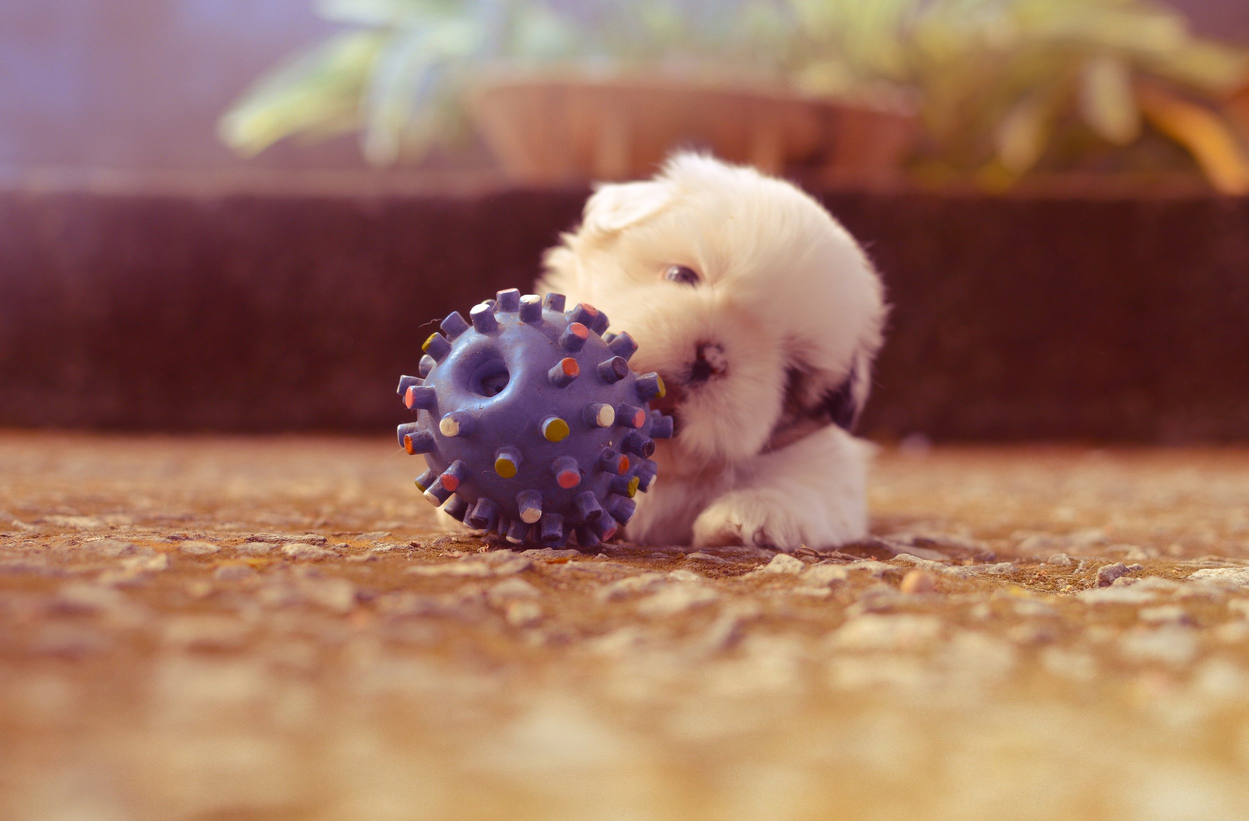 dog-toy-to-be-cleaned.jpg
