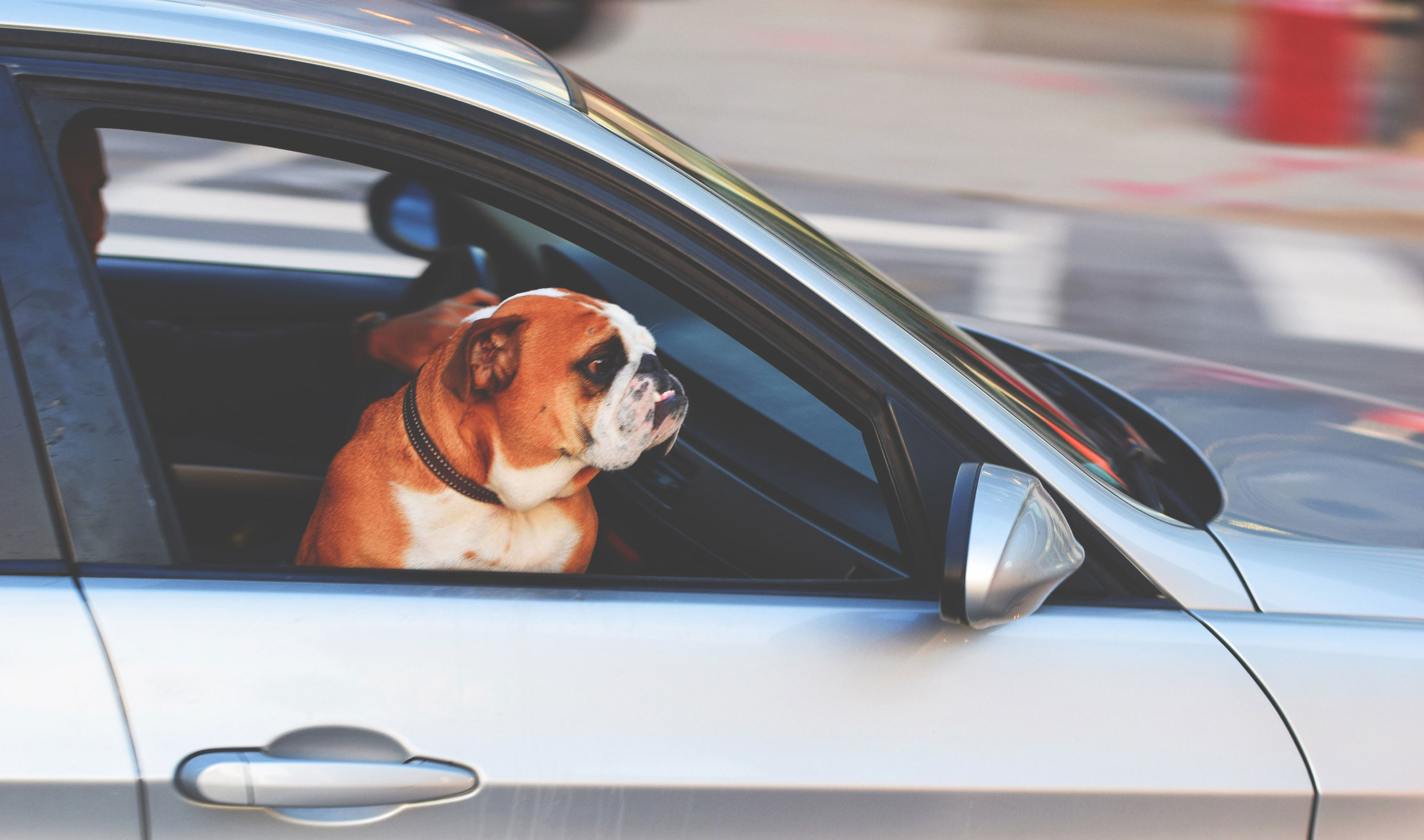 washington-dc-pet-taxi.jpg