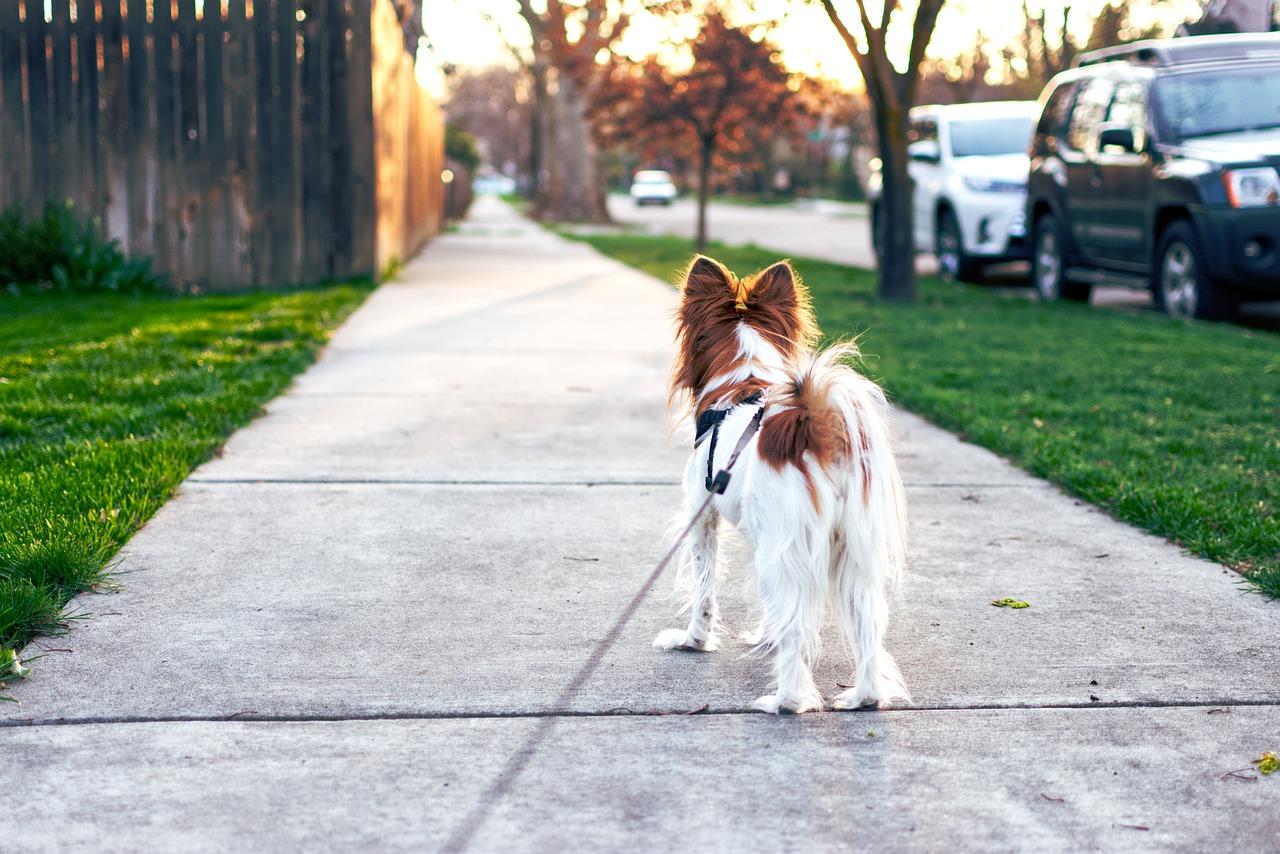 washington-dc-dog-walking.jpg