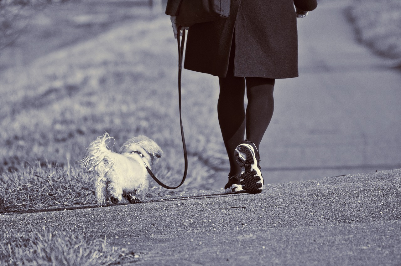 dog-walker-in-dc.jpg