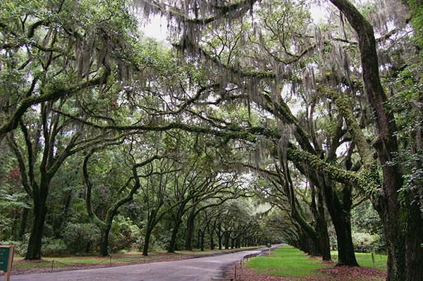 Wormsloe-Historic-Site-from-The-Last-Song-by-Live-the-Movies-3.jpg