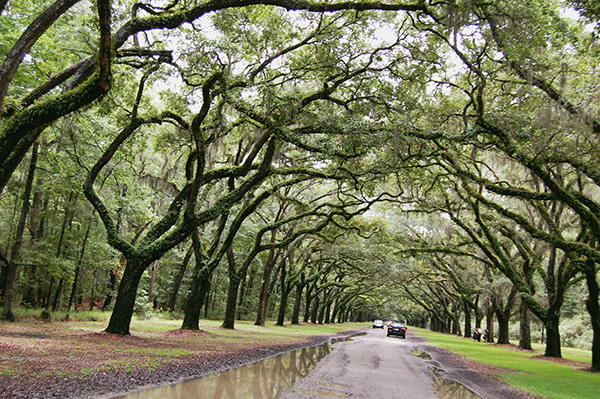 Wormsloe-Historic-Site-from-The-Last-Song-by-Live-the-Movies-8.jpg