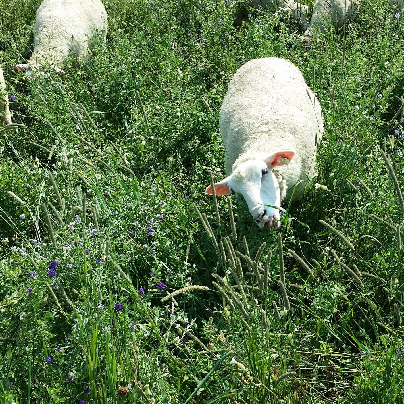 Luscious pasture.