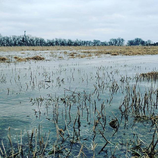 Rain on frozen ground. Blustery. #pasturedpoultry #pasturedpigs #pasture #pasturedsheep #pastureraised