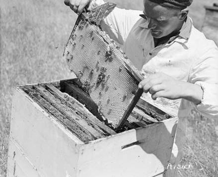 Stevies_beekeeper_NZ.jpg