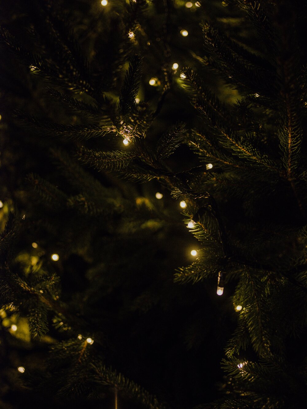 Recycling just one aluminium saves enough energy to run Christmas tree lights for two hours.