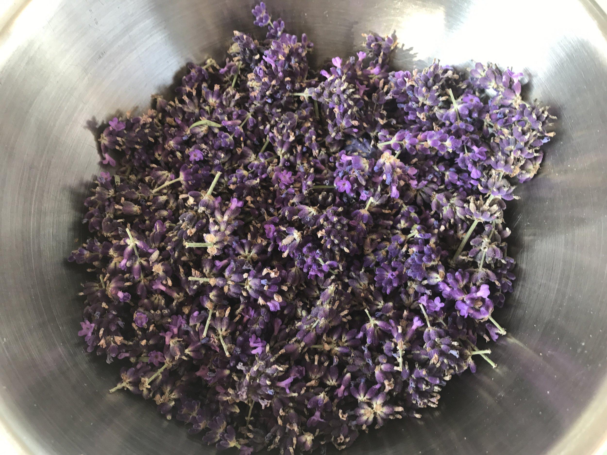 Lavendelernte.jpg