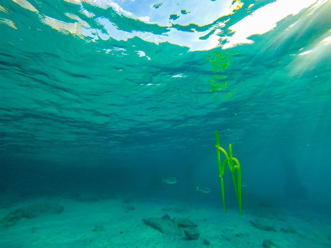 Imagined Reef - Richard Vivenzio