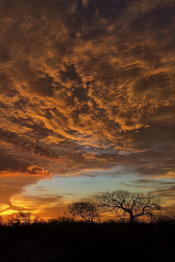 Sunrise @ the Santa Clara Ranch. 2015 © Hector D. Astorga