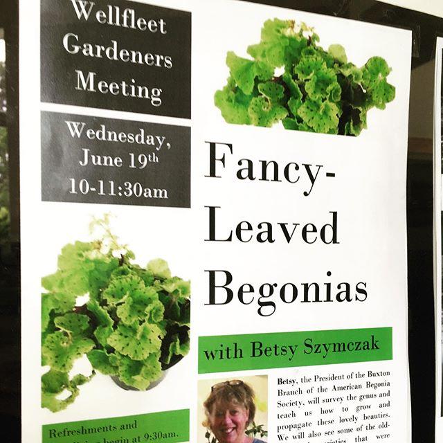 Enjoyed meeting many enthusiastic Wellfleet Gardeners yesterday!#begoniasofinstagram #wellfleet #fancyleafbegonia