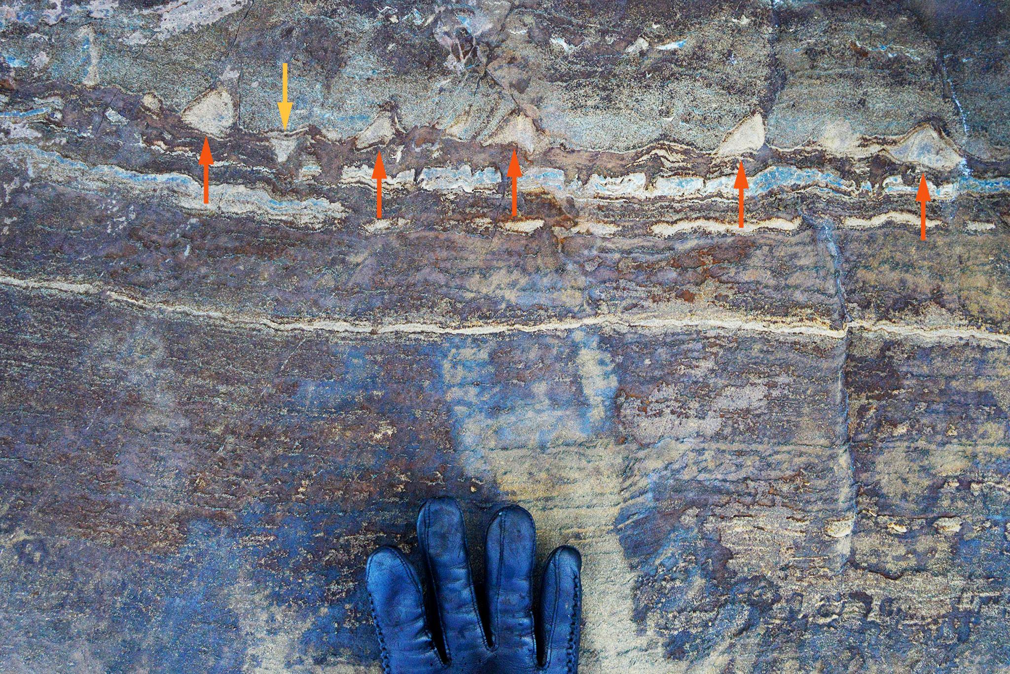 Stromatolites_Lede1300_redarrows.jpg