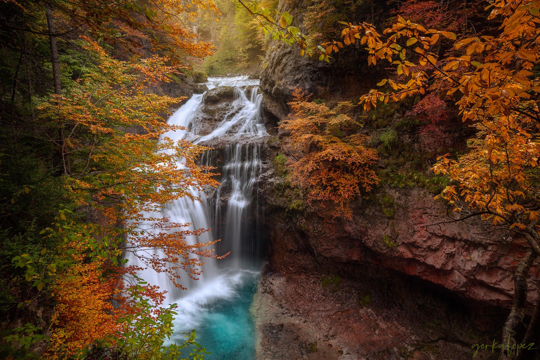 autumn-symphony.jpg